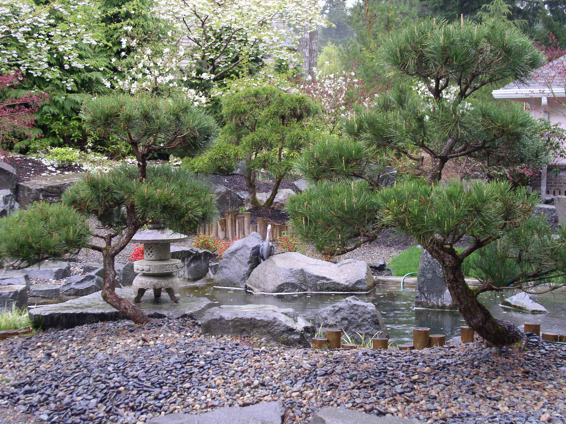 buddhist singles in spruce pine A five-needle pine in particular the influence of zen buddhism and the expression of wabi-sabi so the bonsai is actually a single tree.